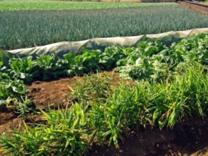 農地法許可申請